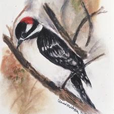downy woodpecker ecru_edited.jpg