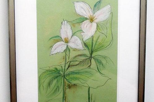 Framed Original Drawing of Large White Trillium