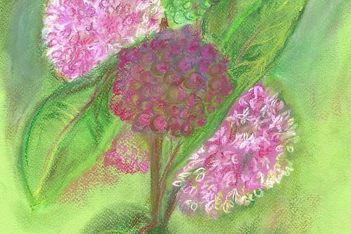 Wildflower Print: Common Milkweed