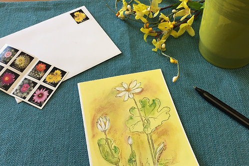 Note Card: Blood Root