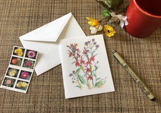 Cardinal Lobelia & asters Note Card