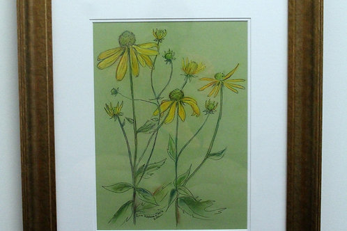 Framed Original of Mountain Sunflower