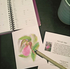 Pink Lady Slipper Note Card