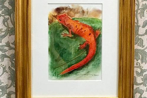 Framed print: Red Salamander