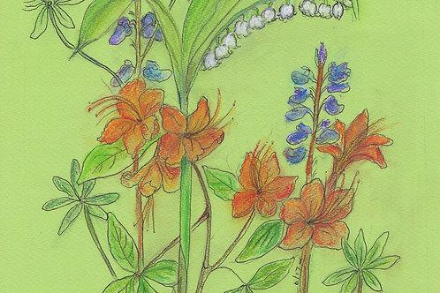 Wildflower Print: Wild Flame Azalea