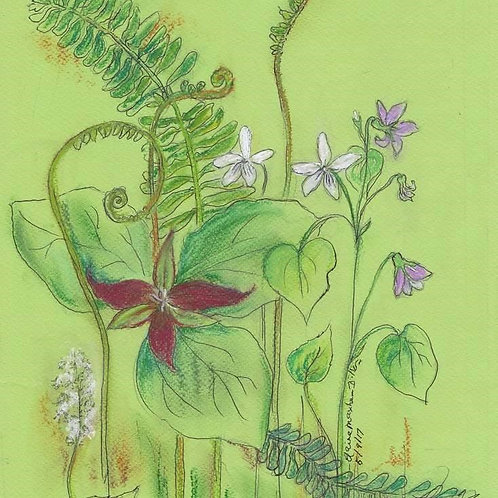 Original: Fiddle head Ferns