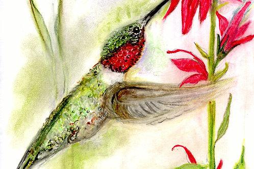 Print: Ruby throated hummingbird