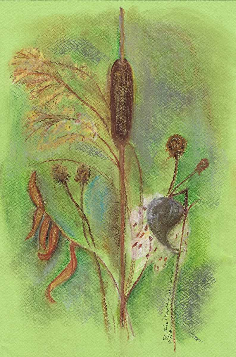 Cattail with milkweed