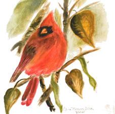 Northern male cardinal