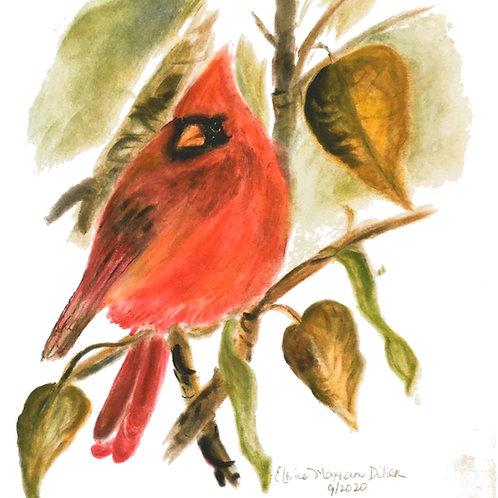 Wild & Wonderful Prints: Northern Cardinal