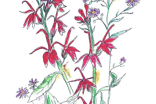 Wildflower Print: Cardinal Lobelia