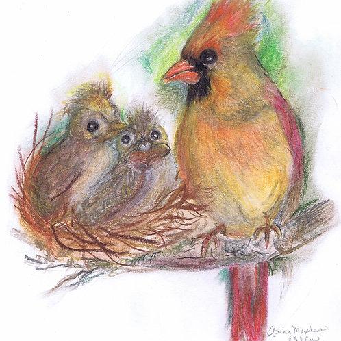 Print: Female Northern Cardinal