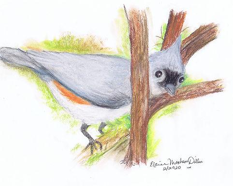 Birds: Prints
