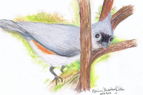 Bird Print: Tufted Titmouse