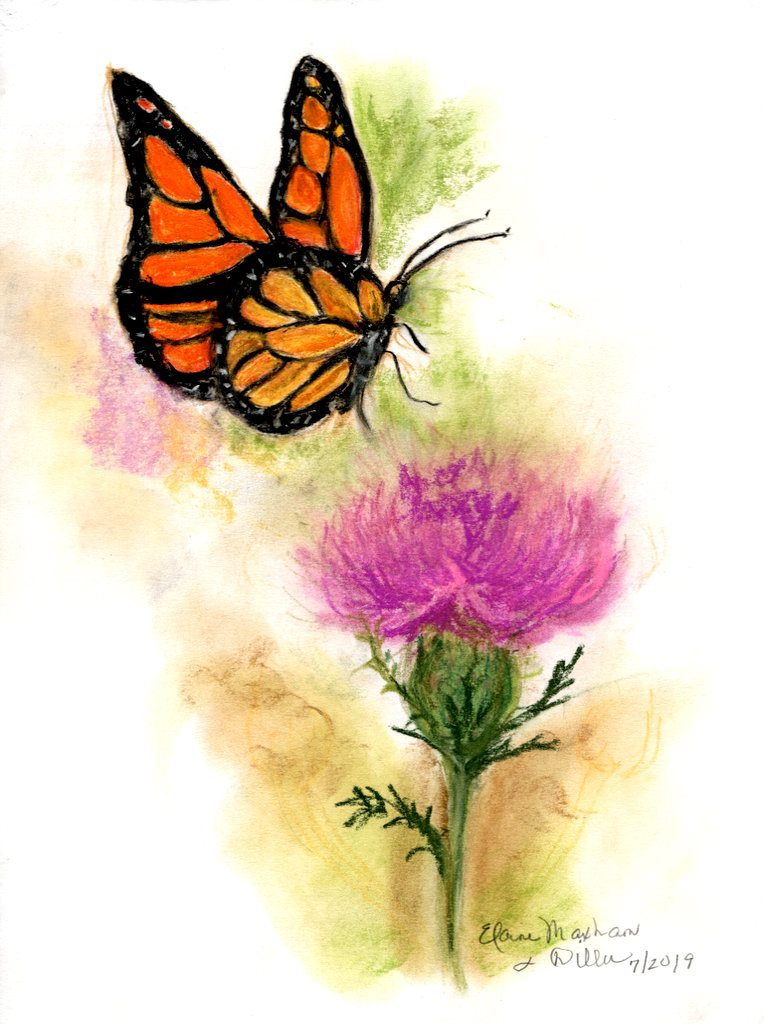 Monarch Butterfly & Thistle
