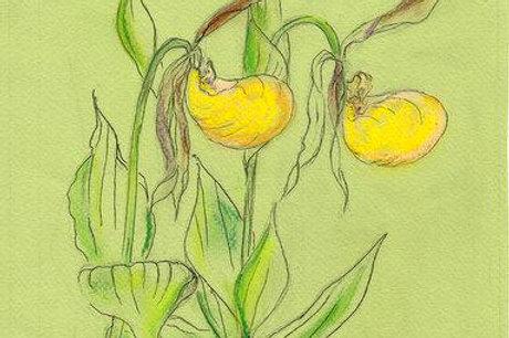 Wildflower Print: Yellow Lady Slipper