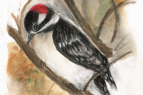 Original: Downy Woodpecker