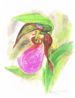 Wildflower Prints: Summer