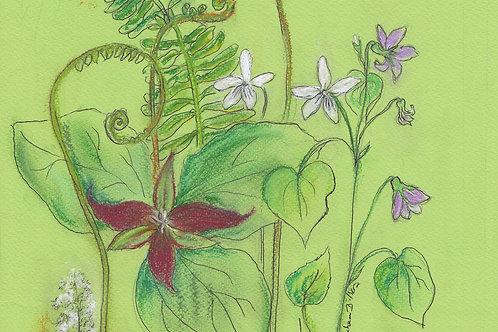 WV Wildflower Prints: Red Trillium