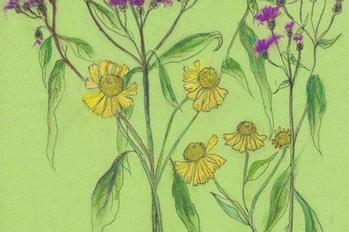 Wildflower Print: Iron weed & Sneeze weed