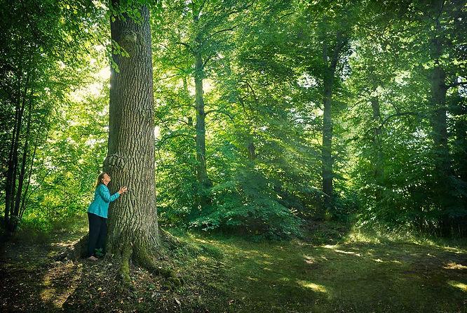 Barbro kramar träd färg låg.jpg