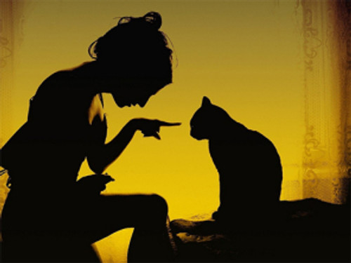 Kommunikation katt