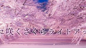 2021.1.28 青森弘前公園 冬季櫻花彩燈✨✨