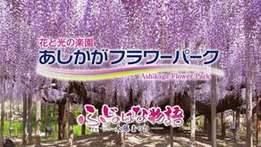 2021.4.14 東京栃木縣「足利花卉公園」