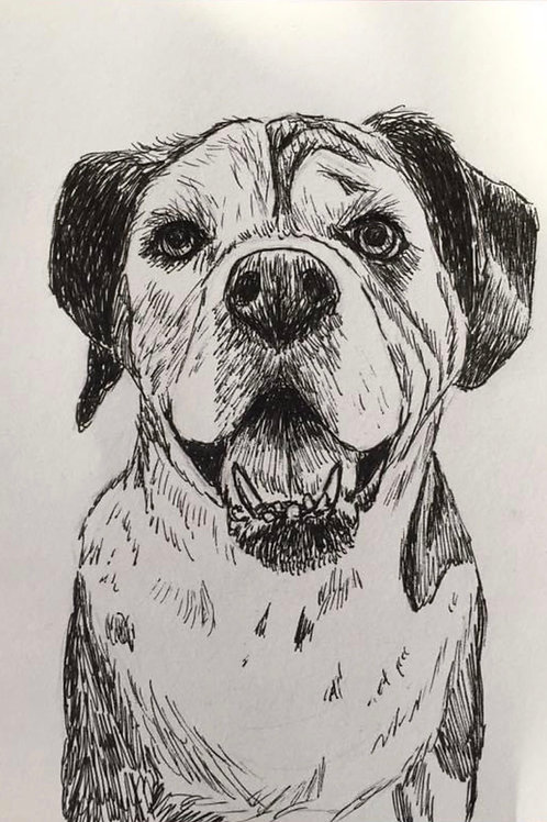 Ink drawing pet portrait