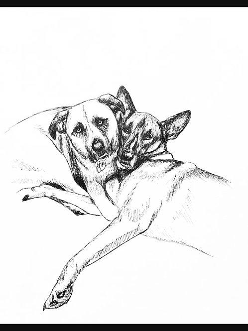 8x10 pet portrait