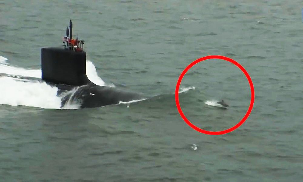 golfinhos e submarino (2).jpg