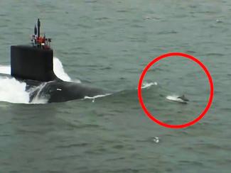 Corrida entre Golfinhos e um Submarino - NOTÍCIA DA SEMANA