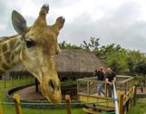 Super Pau de Selfie de 5m para Girafas!