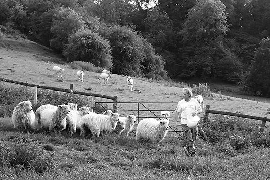 Gary_BW_Flock_Sheep_Bucket_P1110759_LowR