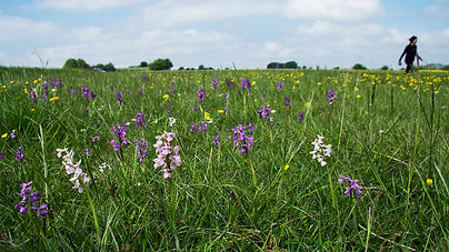 Orchids_NewAdjDec17_Minchinhapton_Markin