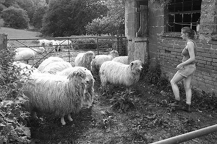 Sheep_Shed_Pen_Molly_CopyrightDeborahRob