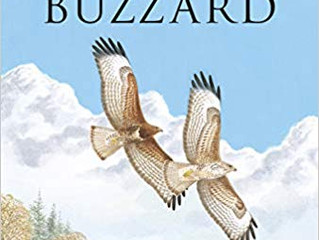 The Common Buzzard by Sean Walls & Robert Kenwood
