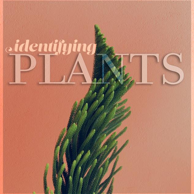 L-plants.png