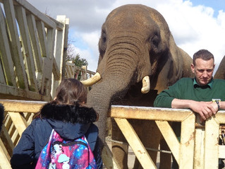 Year 4 Educational Visit to Colchester Zoo