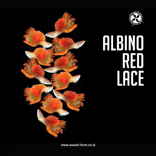 ALBINO RED LACE