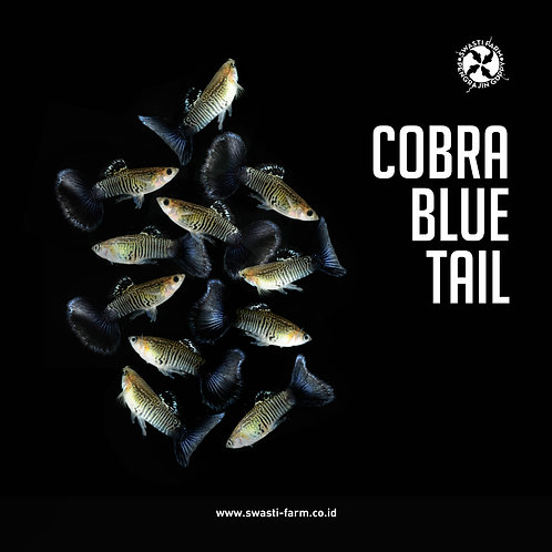 COBRA BLUE TAIL
