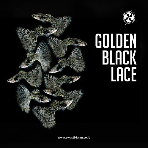 GOLDEN BLACK LACE