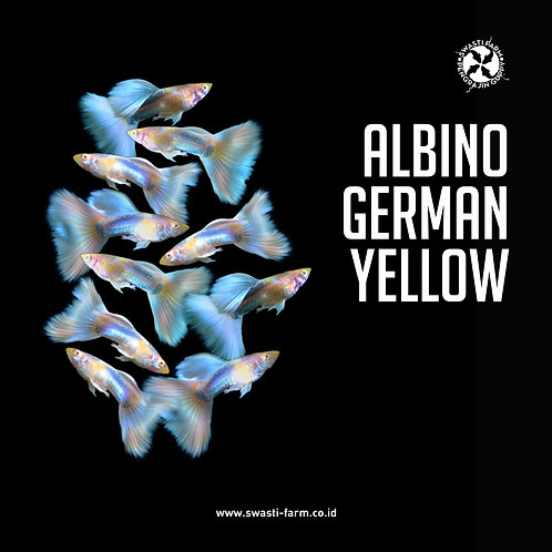 ALBINO GERMAN YELLOW