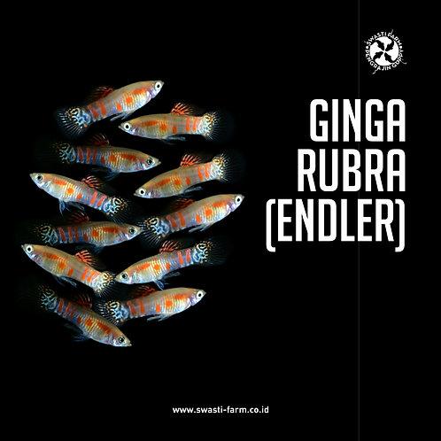GINGA RUBRA (ENDLER)