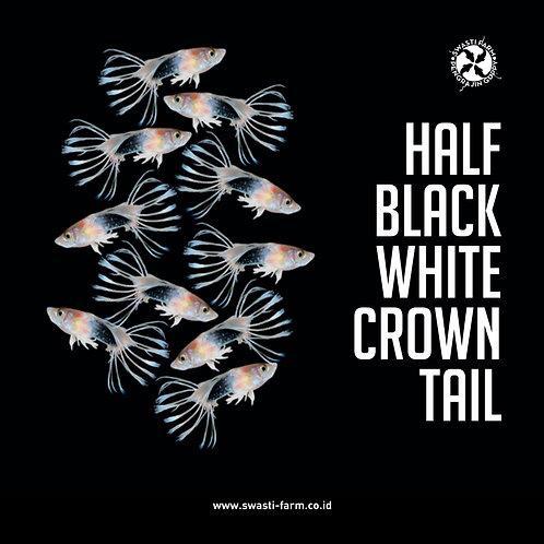 HALF BLACK WHITE CROWN TAIL