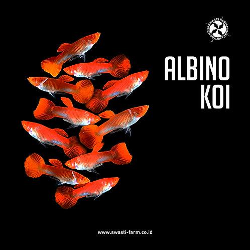 ALBINO KOI