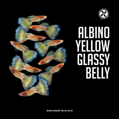 ALBINO YELLOW GLASSY BELLY