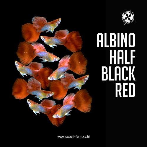 ALBINO HALF BLACK RED