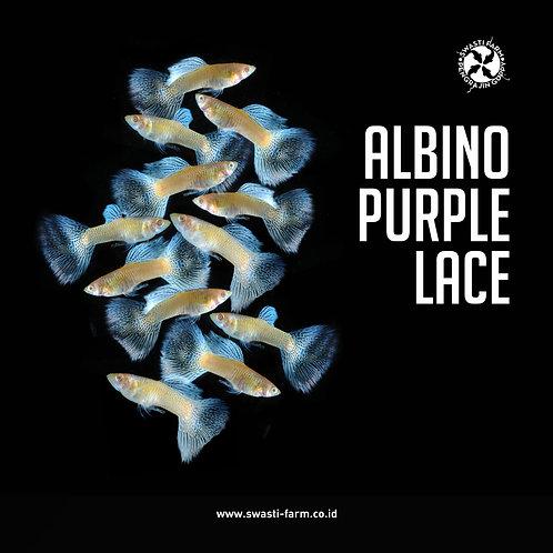 ALBINO PURPLE LACE