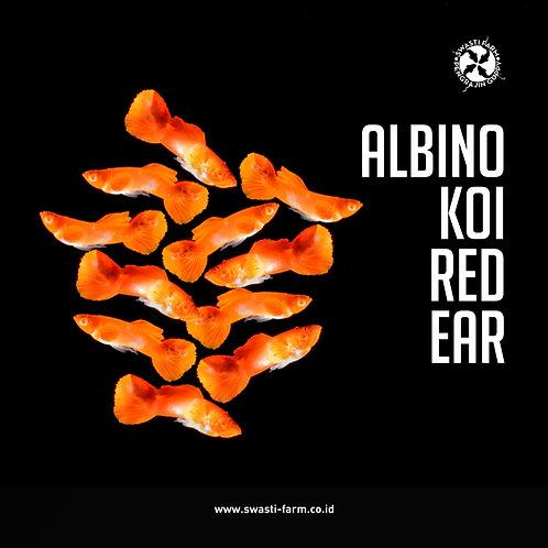 ALBINO KOI RED EAR